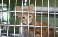 Help clear the shelter
