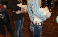 PESH livestock showmen compete