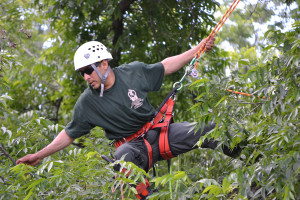 Champion tree climber Vincente Pena-Molina of Wylie works his way through the branches in a competition.