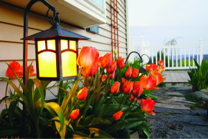 Courtesy photo Outdoor lighting can play up the more decorative features of a yard, including flower beds.