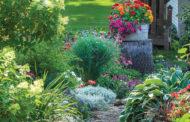 Help plants survive sizzling summer heat