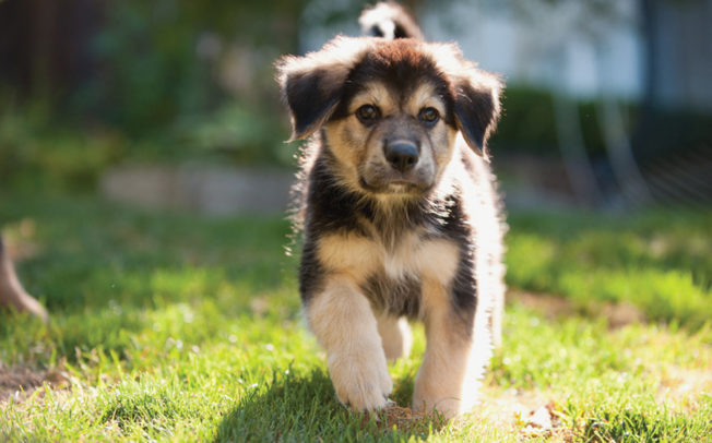 How to recognize signs of heat stroke in dogs