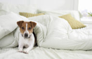 Pet-friendly hotels offer amenities for the whole family