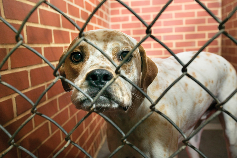 Clear the Shelters event set Saturday Aug. 17