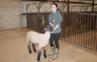 County livestock show opens next week
