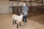 County livestock show opens next week
