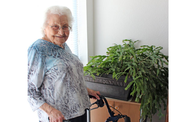 Murphy resident, cactus still thriving after all these years