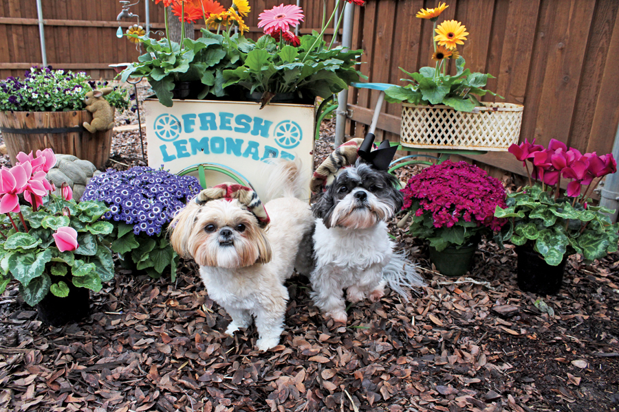 Local rescue dogs get social