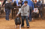 Collin County stock show on despite pandemic