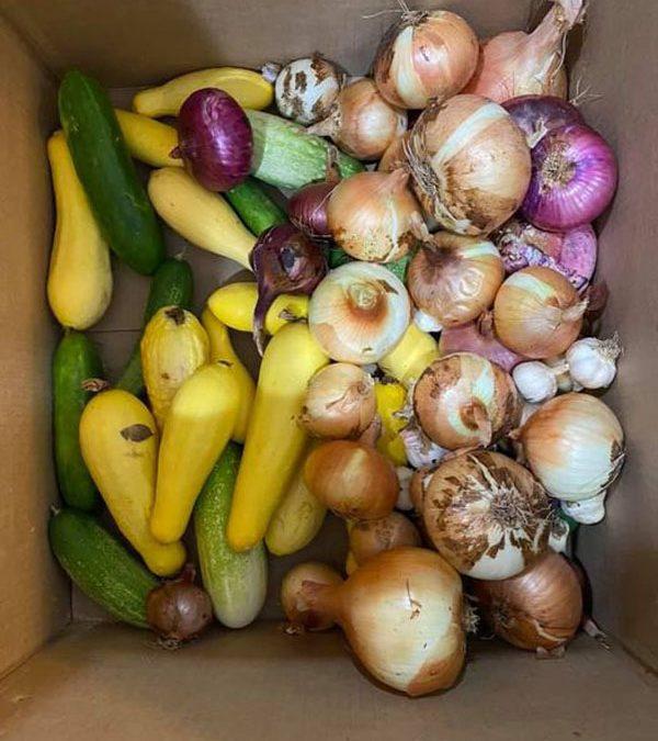 Gardener shares bounty